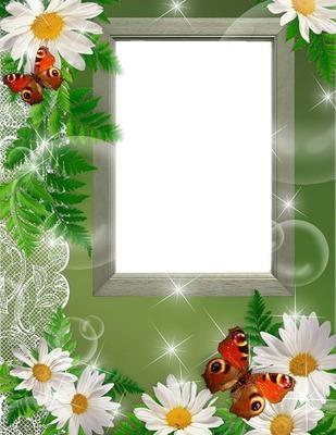 Cadre - marguerites - papillons