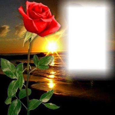 Sun and rose