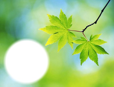 Arbre - feuilles - nature