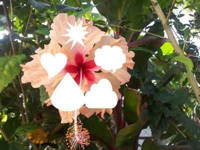 fleur tropical