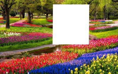 parc fleurie 3