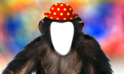 singe avec chapeau 1photo