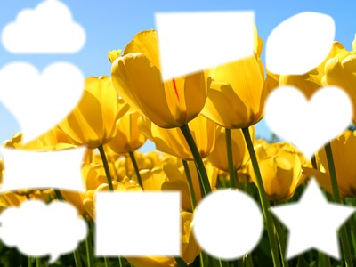 Fond de tulipe
