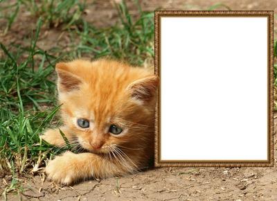 Kotě, rám