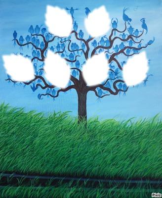 arbre genealogique 6