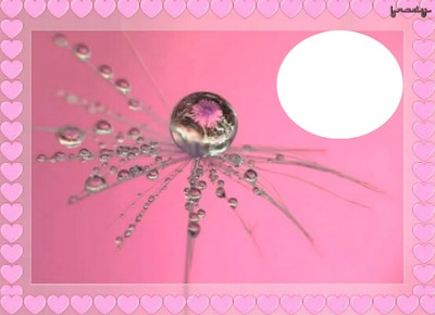 tod@s contra el cancer de mama
