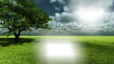 Nature arbre solitaire