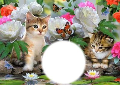 chats pappillons et fleurs