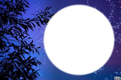 plante bleu du soir
