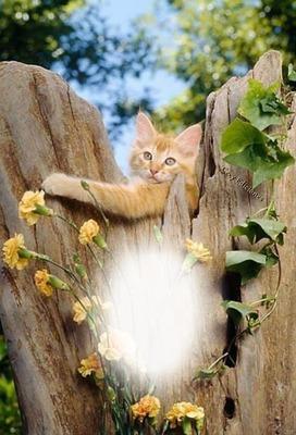 Cc lindo gatito