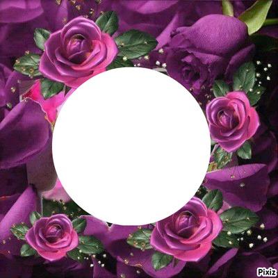 Anniversaire Roses mauves