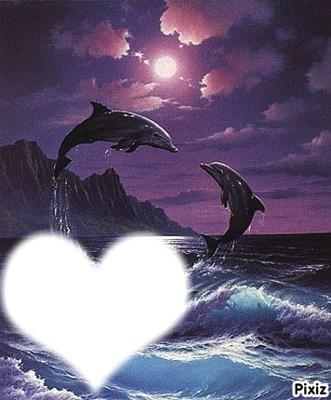 L'amour des dauphins <3