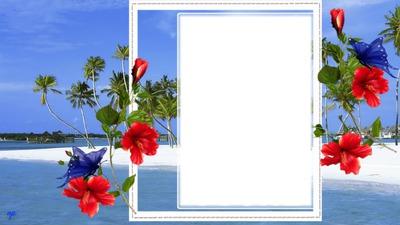 cadre hibiscus