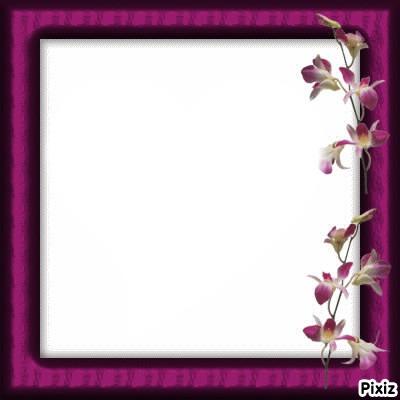 cadre orchidées****