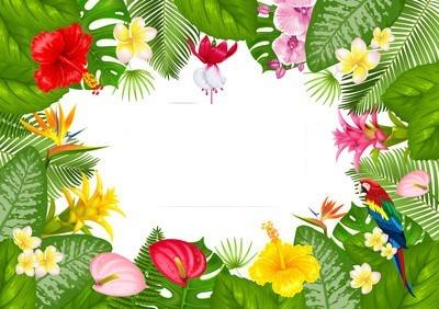 tropical tahiti