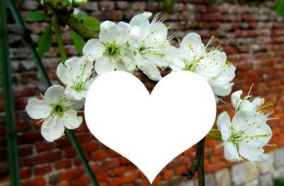 Printemps :coeur et poiriers en fleurs