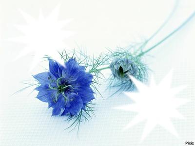 Fleurs bleu azur