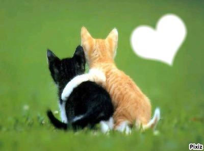 j'aime ces chats