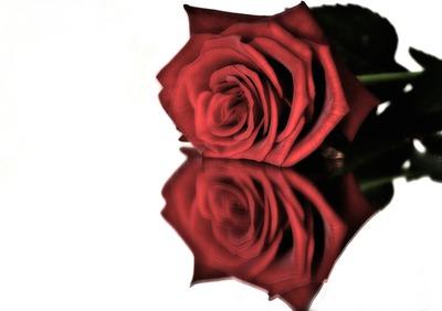 Rose on glas-...