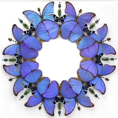 Cc circulo de Mariposas