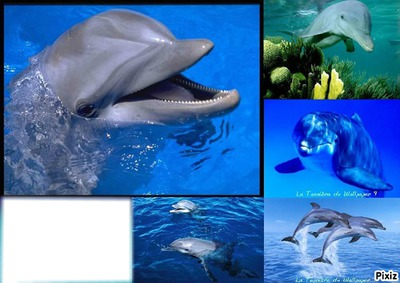 *Familles Dauphins*
