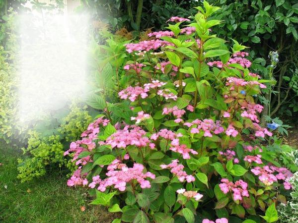 Montaje fotografico fleurs au jardin pixiz for Fleurs thes au jardin