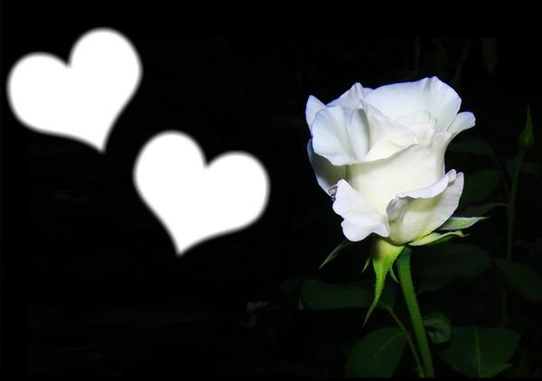Photo montage rose blanche et coeurs - Pixiz