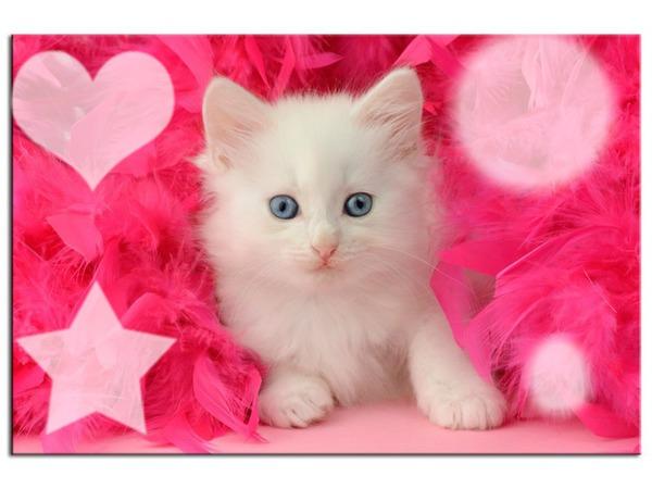 Montage photo le plus beau des petit chat pixiz - Image de petit chat ...
