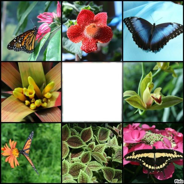 montage photo mosaique de papillons pixiz. Black Bedroom Furniture Sets. Home Design Ideas