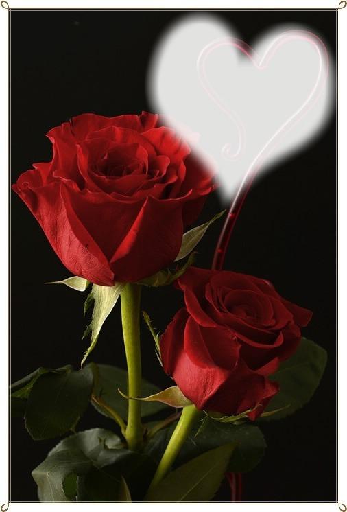 montage photo der duft der rose pixiz. Black Bedroom Furniture Sets. Home Design Ideas